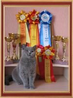 "We have taken part in the international exhibition of cats on May, 28-29th ""the Cup of the White city"" on system WCF in a class of juniors."
