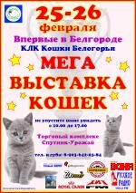 February 25-26, Belgorod was a big cat show. Our cat Lucy has become the face of this exhibition on the advertising posters.
