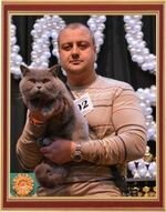 "World Cat Show 5-6 October 2013 ""WCF SilverJubilee - 25 Years Anniversary"", Dnepropetrovsk, Ukraine. Here she is, the last step to the top! At the World Cat Show our cat Yannick Champion of the World!"