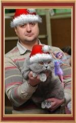 British Shorthair Cattery Wool Spirit Happy New 2014 Year and Merry Christmas!
