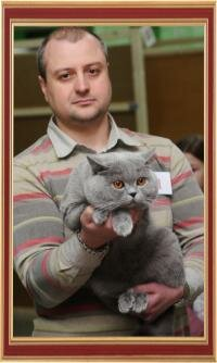 International Cats Show on March 2-3, 2013, Belgorod.