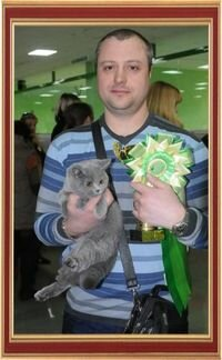 International Cats Show on April 27-28, 2013, Belgorod.